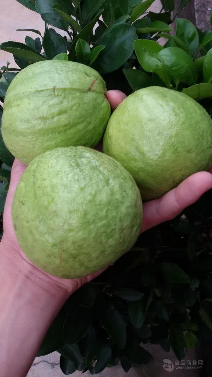 海南水果特产番石榴 产地直销5斤包装