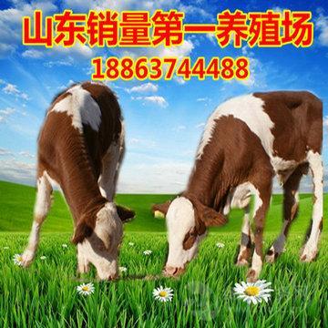 [山东黄牛交易市场]山东黄牛价格
