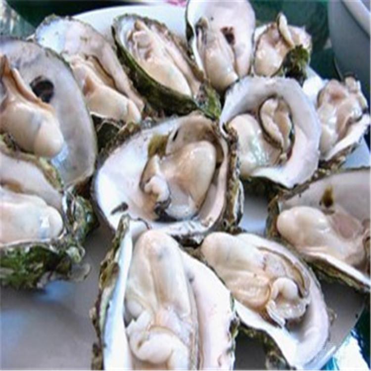 牡蛎多糖30%-50% 厂家现货包邮