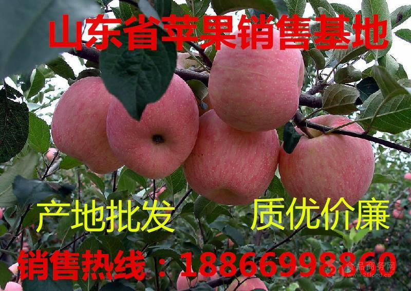 2017年山东红富士苹果价格行情