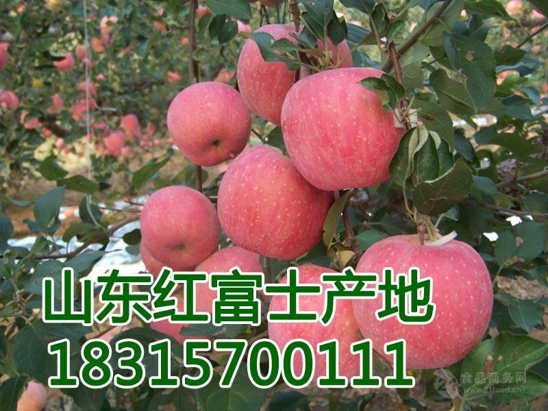 今年  陕西红富士苹果价格   陕西苹果产地报价详细