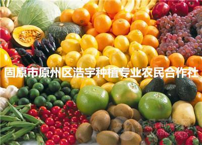 果蔬粉 天然果素酵素粉 果蔬酵素粉 厂家直销 现货包邮