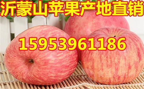 今年山东红富士苹果价格