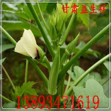 黄秋葵粉供应 厂家包邮 专业提取 基地生产