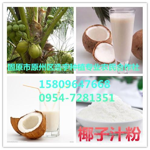 供应椰子汁粉  椰子果粉 椰子汁速溶粉