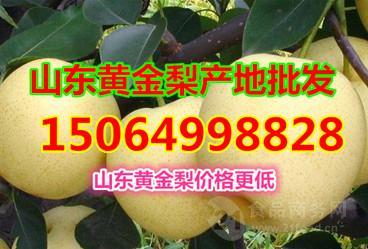 山东黄金梨批发价格,黄金梨产地