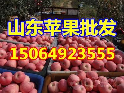 红富士产地红富士苹果产地山东红富士苹果的产地