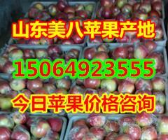 山东苹果产地,山东苹果产地哪里好