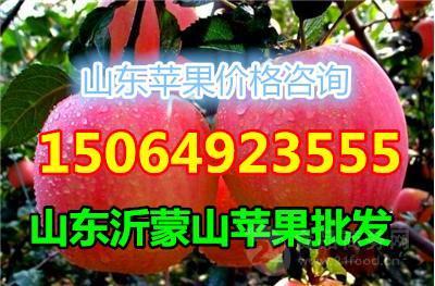 山东省红富士苹果价格,红富士苹果产地