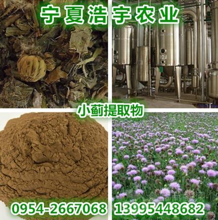 宁夏高含量小蓟提取物 小蓟多糖 刺蓟菜熟粉 小蓟浸膏粉