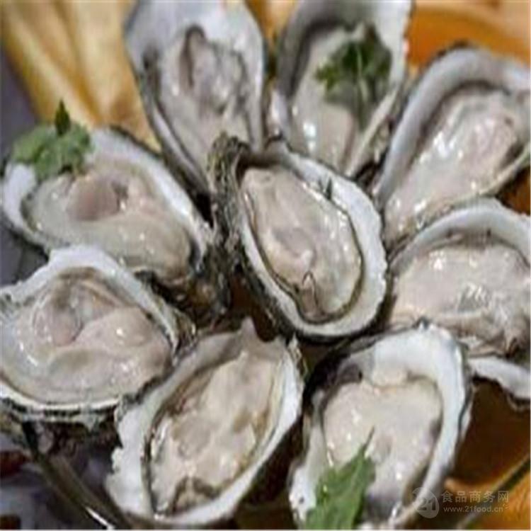 牡蛎肽 厂家现货直销