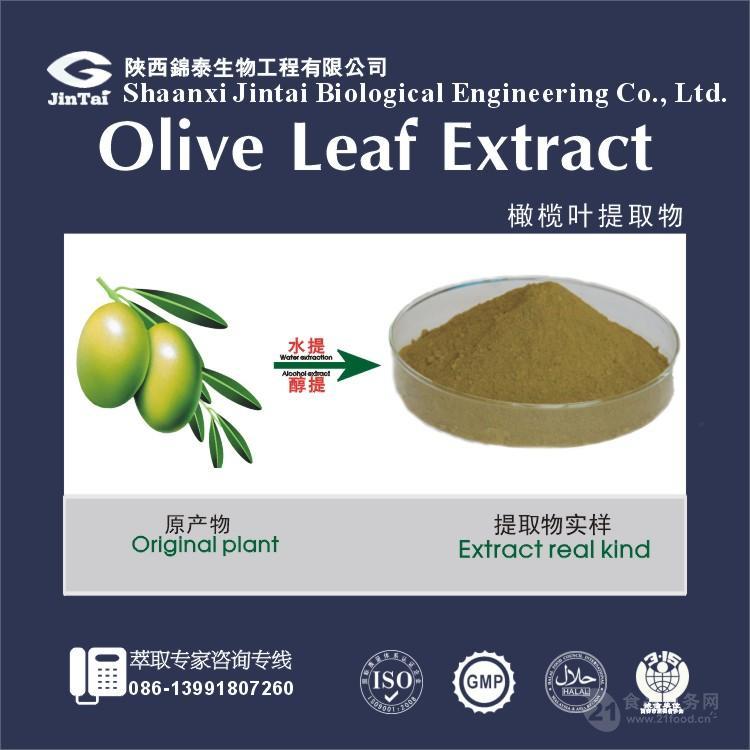 高品质 橄榄叶提取物 橄榄苦甙10% 20%