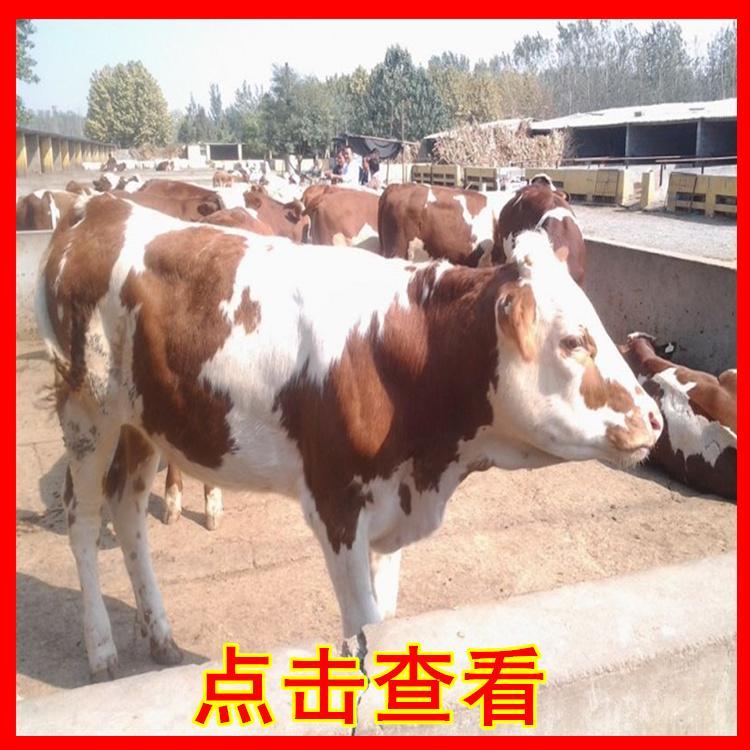 姚安县养牛场