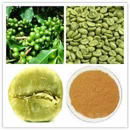 厂家供应绿咖啡豆提取物 咖啡豆绿原酸含量50% 解毒养颜 品质保证