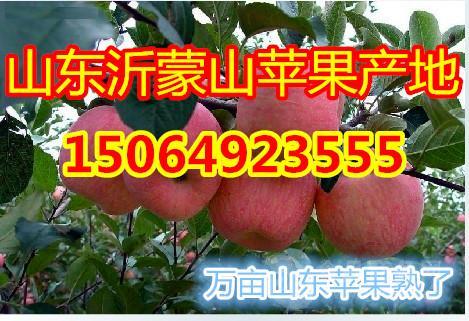 山东红富士苹果批发价格,山东苹果价格