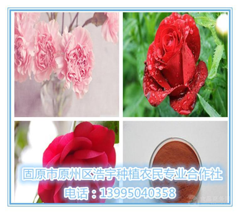 玫瑰花提取物 玫瑰花浸膏粉 玫瑰花速溶粉 玫瑰花粉 批发价格