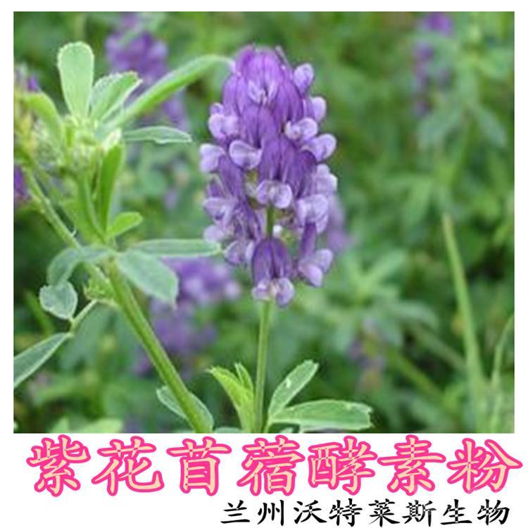 紫花苜蓿酵素粉