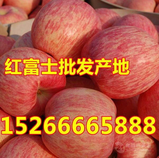 山东红富士苹果批发基地产地直销15266665888