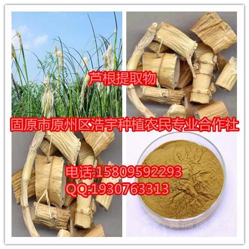 芦根提取物 速溶粉 浸膏粉 生粉 原粉