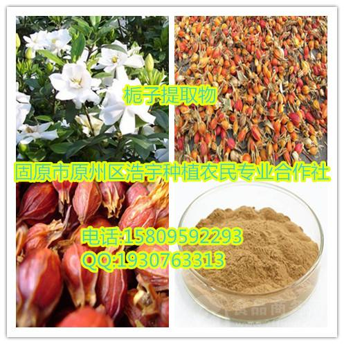 栀子提取物 栀子苷20%  速溶粉 浸膏粉