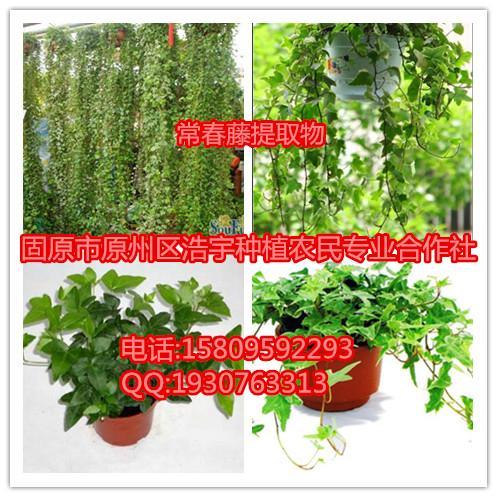 常春藤提取物  常春藤碱 速溶粉  浸膏粉  生粉 原粉
