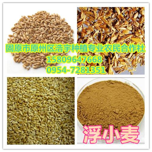 浮小麦提取物 浮小麦精细粉 浮小麦速溶粉