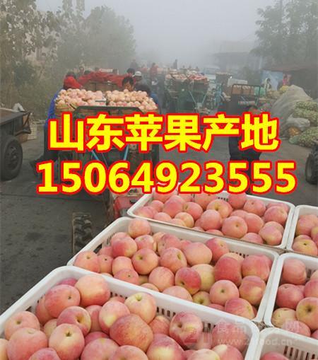 今日山东省红富士苹果价格行情
