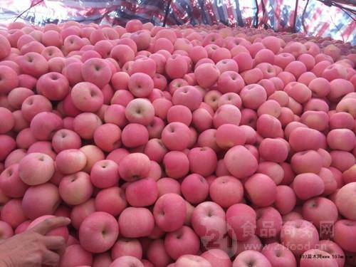 最新纸袋红富士苹果价格