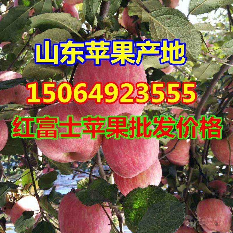 湖南红富士苹果价格,红富士苹果批发价格