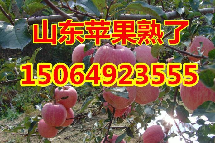 今日湖南条纹红富士苹果批发价格