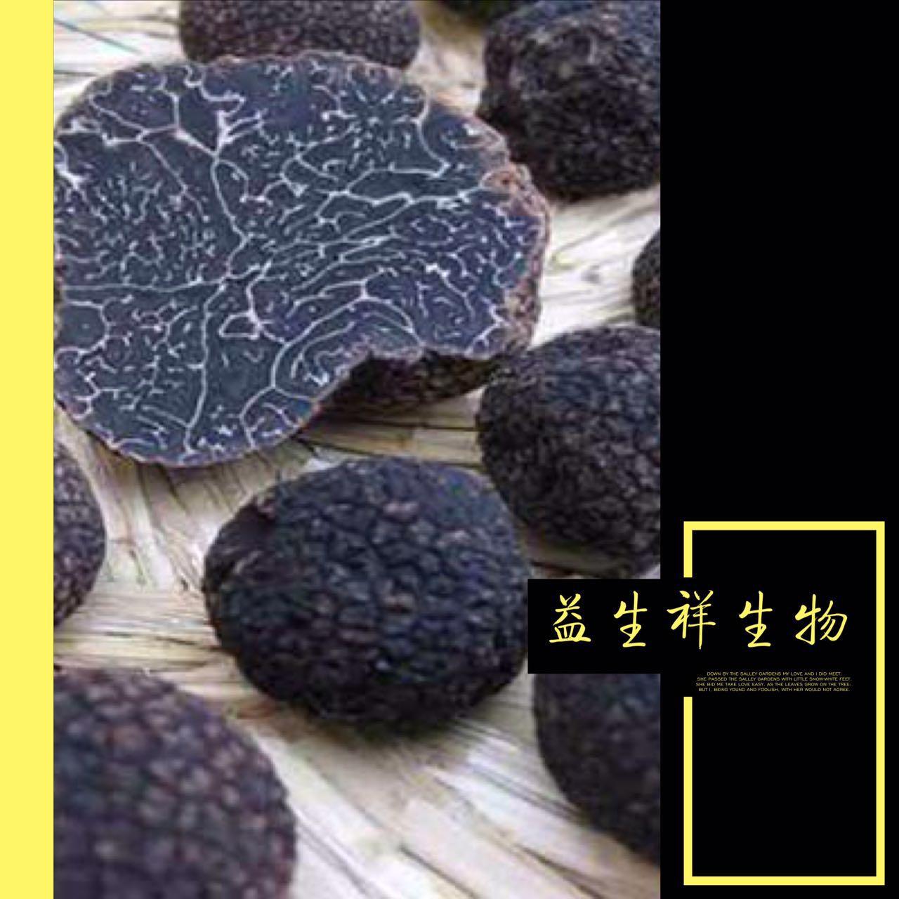 现货供应黑松露提取物 黑松露纯粉 保健食品 质量保证
