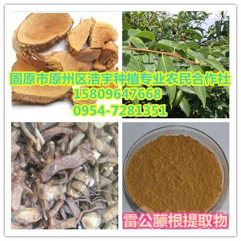 厂家供应 雷公藤提取物10: 1 黄藤根提取物 黄药提取物