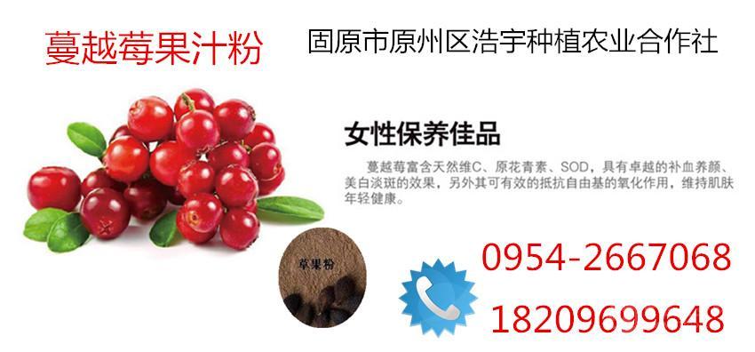 现货供应蔓越莓果汁粉、蔓越莓活性酵素粉 特价热销