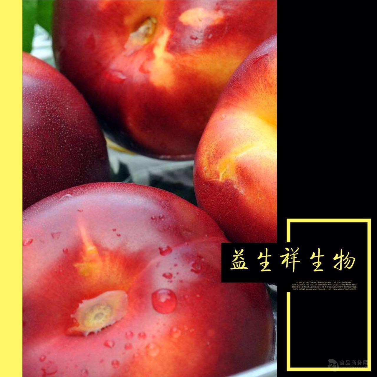 油桃粉 油桃提取物 益生祥植物提取物厂家直销