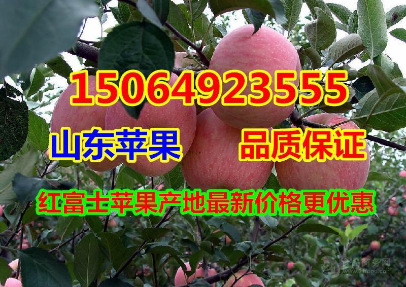 甘肃红富士苹果批发价格,山东苹果产地价格