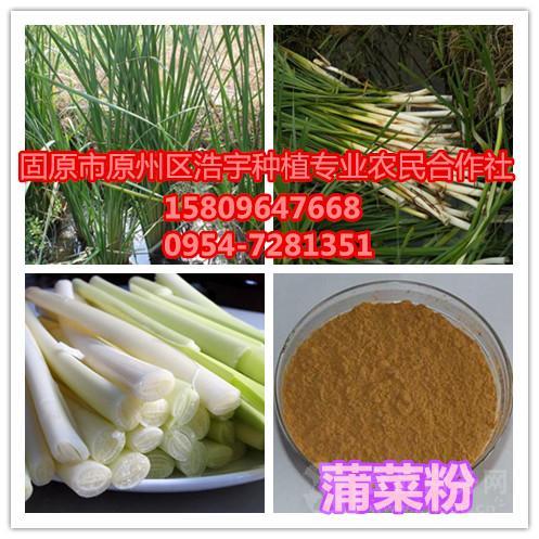 飞碟瓜:浙江嘉兴市场:客菜减少 菜价在低位徘徊