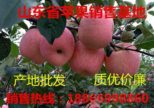 优质冷库红富士苹果最新价格