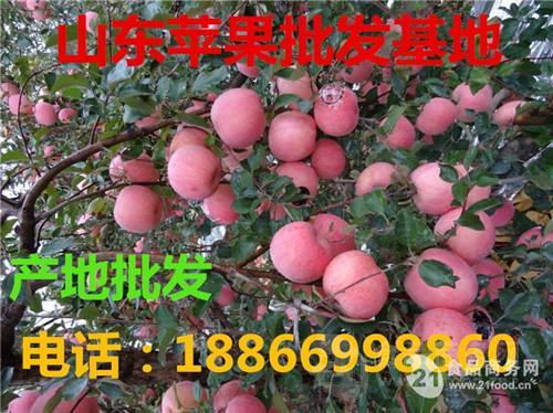 2017年山东红富士苹果价格行情低迷