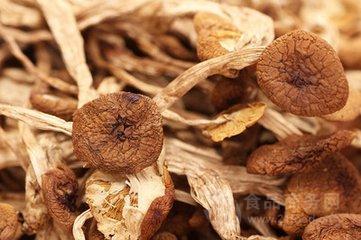 茶树菇提取物