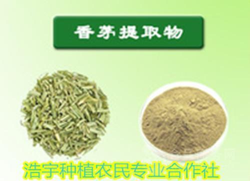 香茅提取物 香茅草提取物  香茅速溶粉 香茅浸膏粉
