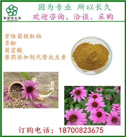 紫锥菊提取物   菊苣酸2%    质量上乘  薄利多销  现货直销