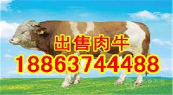 肉牛犊育肥技术