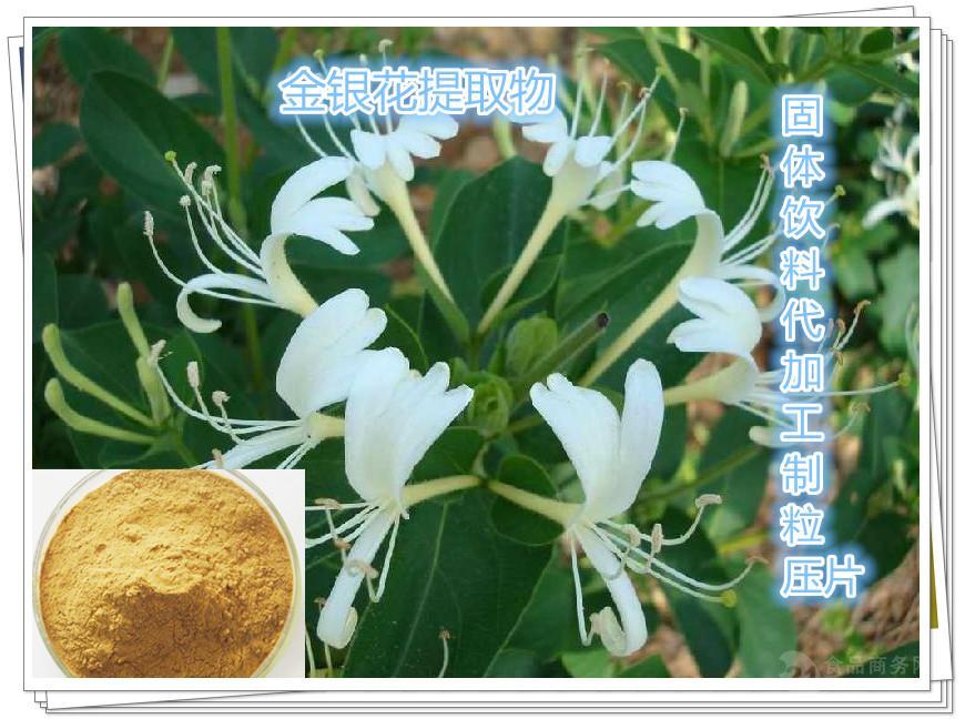 金银花提取物(绿原酸)厂家批量现货供应,代加工制粒