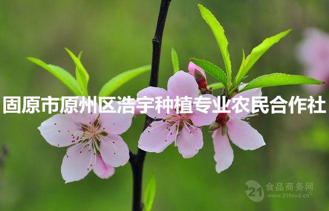 桃花粉厂家直销 桃花纯粉 祛斑美容养生 花茶粉现磨200目