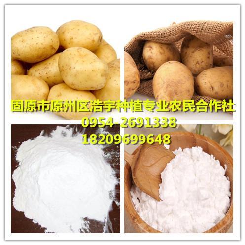 土豆淀粉  马铃薯淀粉   洋芋淀粉厂家  宁夏固原浩宇种植基地
