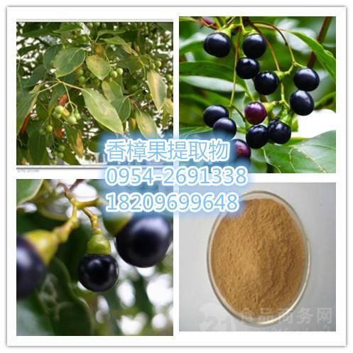 香樟果提取物厂家 樟树果实的功效 黄樟果浓缩速溶粉价格