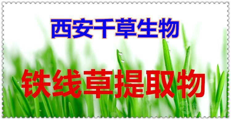 铁线草提取物 厂家生产动植物提取物定做浓缩纯浸膏