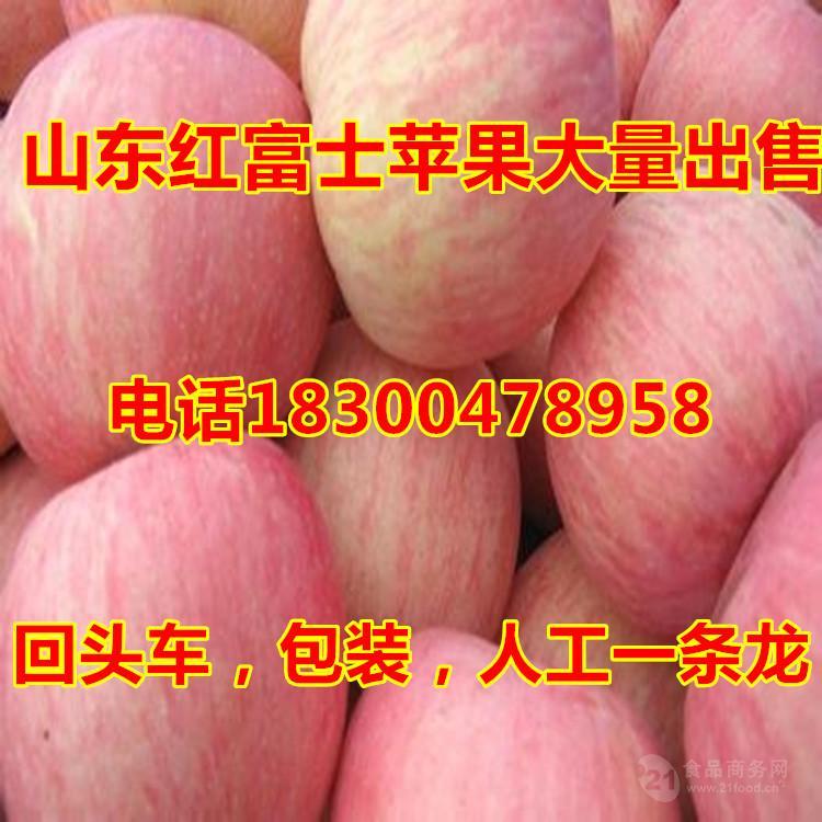 山东红富士苹果批发价格冷库苹果便宜了