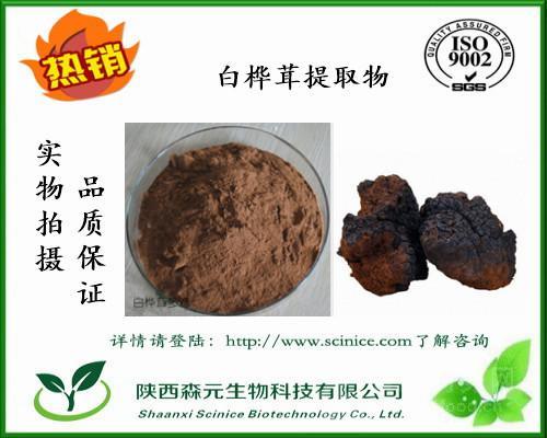 白桦茸提取物 10:1 桦褐孔菌提取物 含白桦茸多糖 工厂现货直销