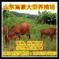 肉牛肉羊养殖场陕西